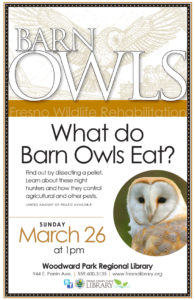 What Do Barn Owls Eat?
